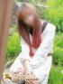 ☆ひかり(19)☆パイパン