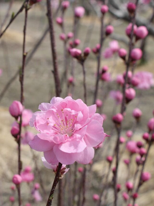 麗らかな季節(*^▽^*)