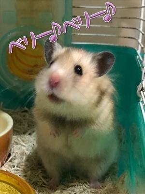 てんちょうー(ベリー♪ベリー♪)