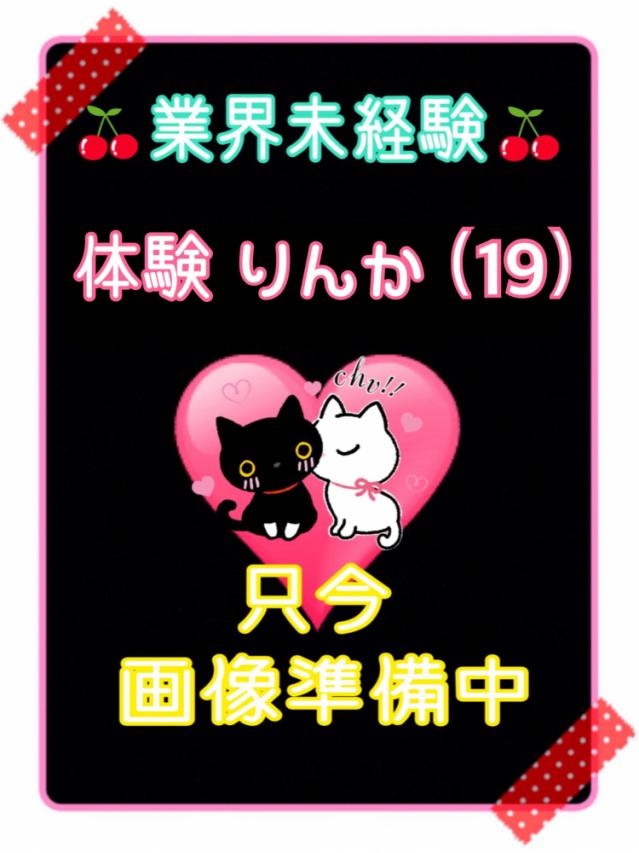 猫のオプション紹介!!