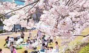 4月もお花見や入学式など、イベントがたくさん!1年の中で一番わくわくするイベントは何ですか?